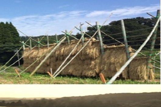石川県津幡町にて自然栽培に挑戦